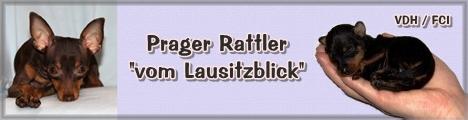Banner Parager Rattler vom Lausitzblick